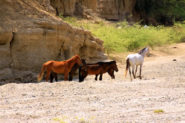 Take a desert tour of one of the many dry river bed canyons by horse back.
