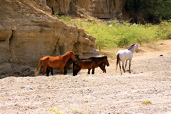 Take a desert tour of one of the many nearby dry river bed canyons by horse back